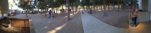 Pokemon players in the park.